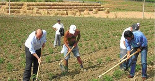Disoccupazione agricola: quando si può richiedere? Quanto si percepisce?